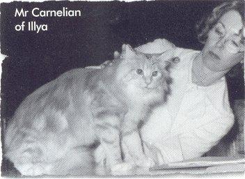 Image of Mr. Carnelian of Illya