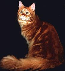 Image of Firerose Desert King