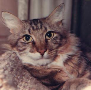 Image of Dauphin de France of Tati-Tan [New York, US]