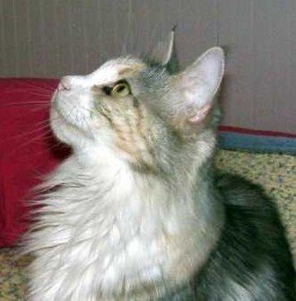 Image of Meowy-Kazowy Emma Peel of Ociopia