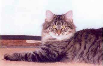 Image of Four Paws Sparrow