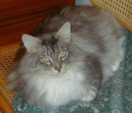 Image of SaintClouds Silver Shadow