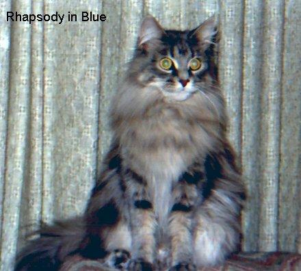 Image of Willowplace Rhapsody In Blue