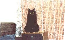 Image of Gemütlichkat Erin of Charmingcat