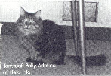 Image of Tanstaafl Polly Adeline of Heidi Ho