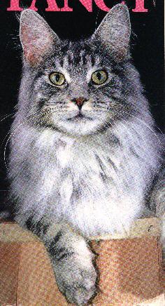 Image of Calicoon Prince Valiant, OS