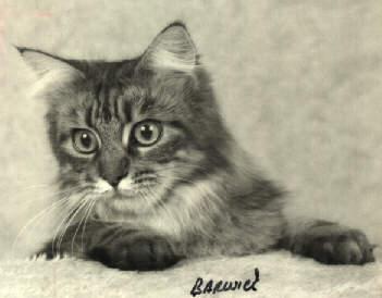 Image of Walmet Suzette, OD