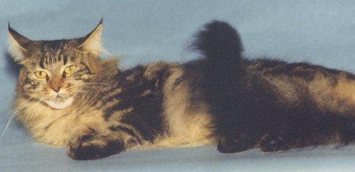 Image of Heidi Ho Molly B. of Tanstaafl