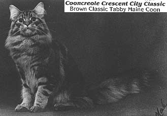 Image of Cooncreole Crescent City Classic, OS