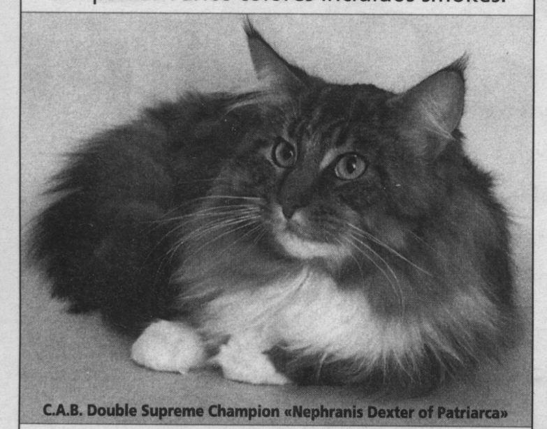 Image of Nephrani Dexter of Patriarca