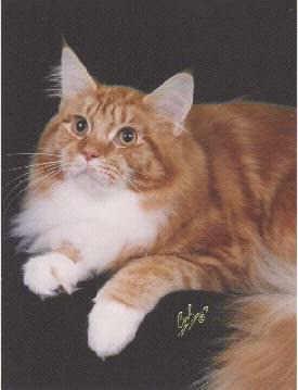 Image of Angtini Jean-Claude Kitty, DM
