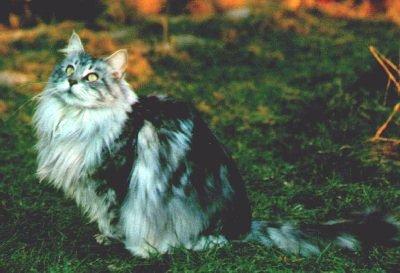 Image of McKittycreek Janet of vom Weidebusch