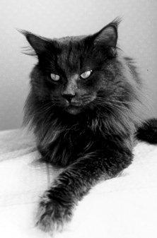 Image of Caprix Blue Bogart