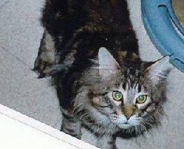 Image of Islandcats Tarheels of Hillside