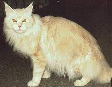Image of Kitty-Up Geronimo