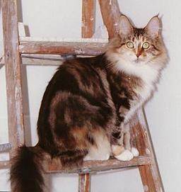 Image of Essie Coons Sasafras of Le Beau Minu