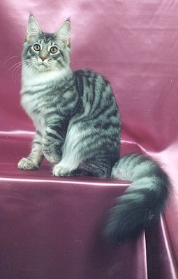 Image of Koontucky MacMarvelous of Kellycat