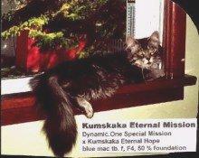 Image of Kumskaka Eternal Mission