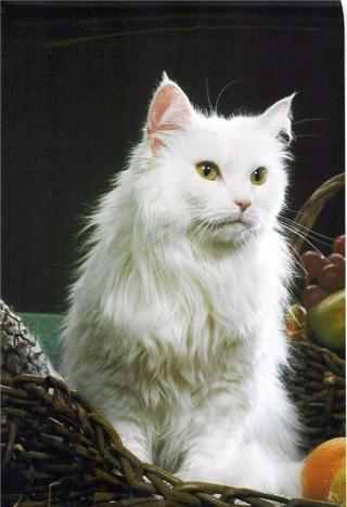 Image of Berenice von Oetisheim