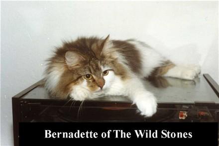 Image of Bernadette of The Wild Stones