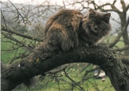 Image of Cassiopeia Winnie
