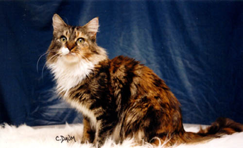 Image of Charmalot Patchwork Princess