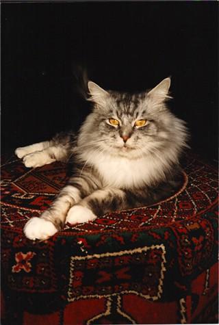Image of Nonsuch Geoffrey