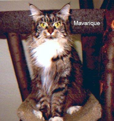 Image of Marimick Maverique of Willowplace