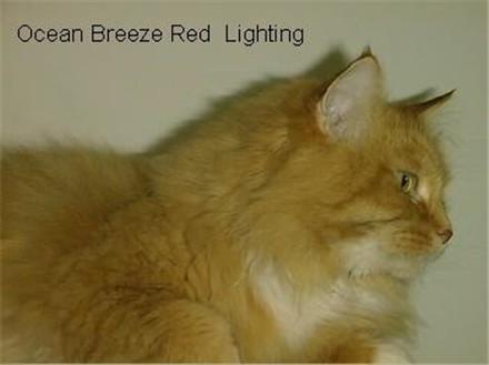 Image of Ocean Breeze Red Lightning