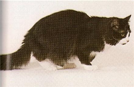 Image of Patchet Mokie Mudpie of Schick