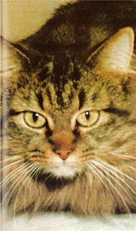 Image of Sergeant Whiskers of Schick [Virginia, US]