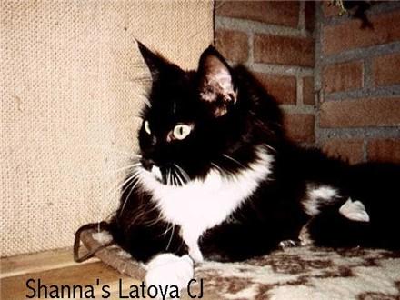 Image of Shanna La Toya C.J.