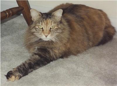 Image of Shy Precious of Schick [Virginia, US]
