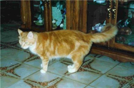 Image of Tigercats Princess Leia of Le Beau Minu