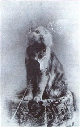 cosey-BIS1895.jpg
