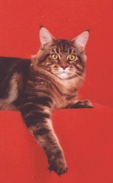 Image of Pinecoon Buckskin Harry