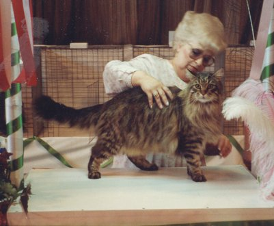 Image of MtKittery Warren Peace of Coons'kin Cats