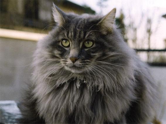 Image of Afjord's Gandalf