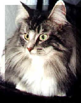 Image of Amantis Artemisa