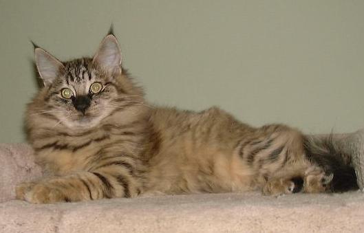 Image of Baltimoor's Knut