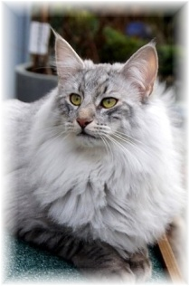 Image of Belminis Xanthus