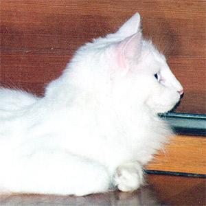 Image of Catline Evita
