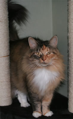 Image of Ciara av Jobu