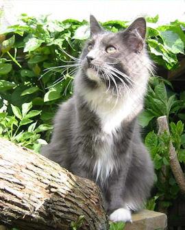 Image of Dunderkattens Sigurd