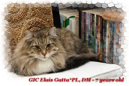 Image of Elais Gatta, DM