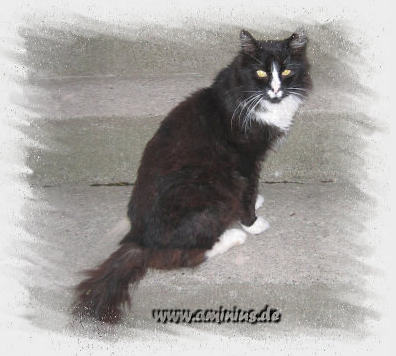 Image of Ellila's Sylvester