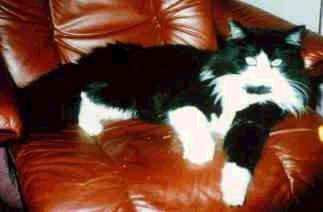 Image of Felix