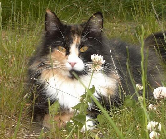 Image of Fjeldkatten's Kathleen