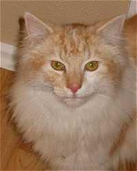 Image of Freki's Victor