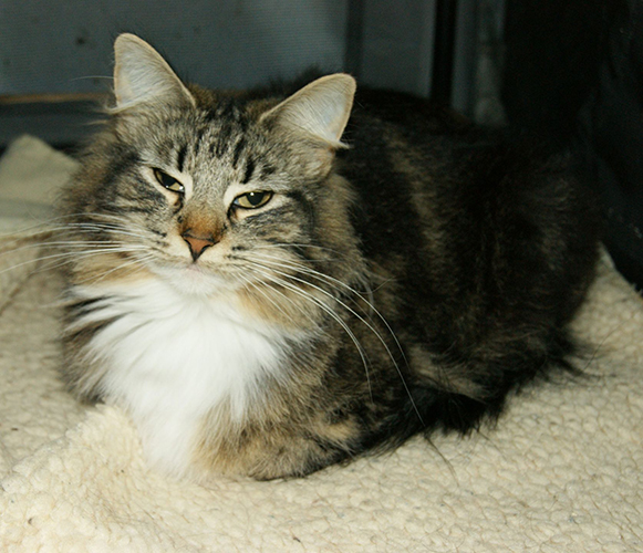 Image of Fyrendal's Olivia